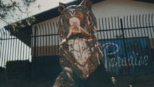 The Paradise High School bobcat statue.